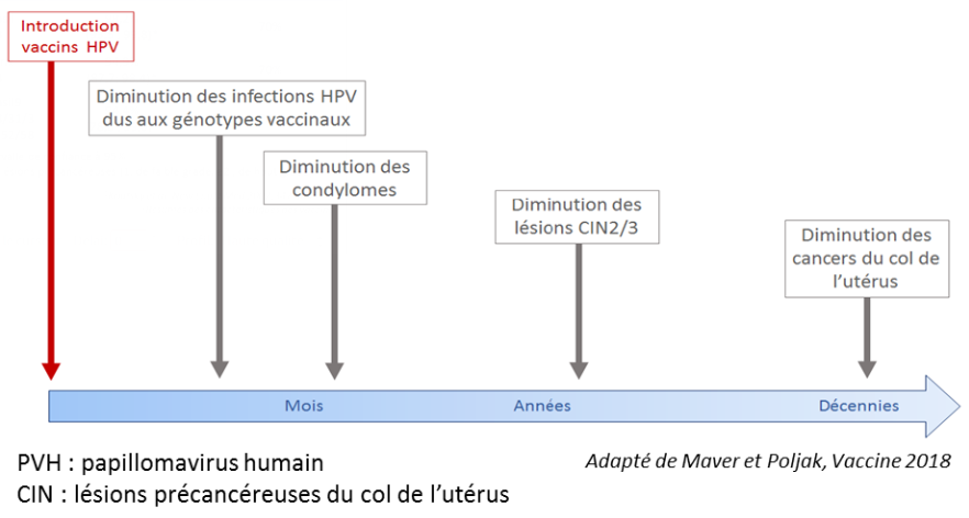 vaccin papillomavirus efficacite o detoxifiere corecta